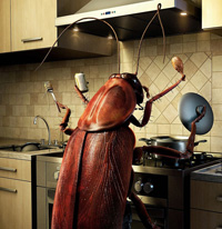 bugs-in-the-kitchen