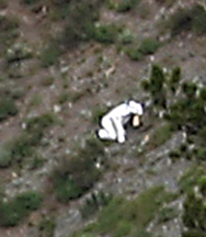 Mystery of Utah_s _goat man_ is solved - U.S. News.png
