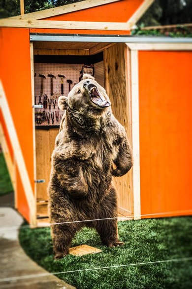 murray sawchuck bear.jpg